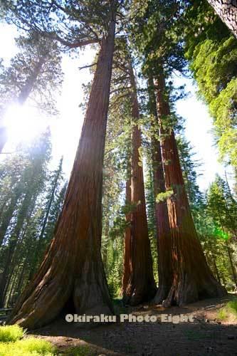 a-YosemiteD12-8.jpg