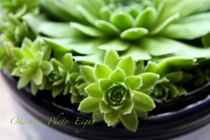 a-green09-4.jpg