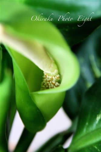 a-greensnou09-15.jpg