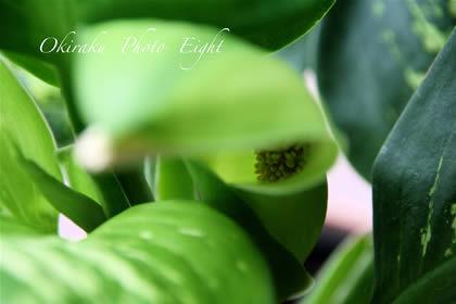 a-greensnou09-4.jpg