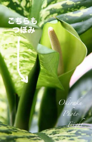 a-greensnou09-8.jpg