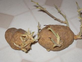 a-potato2.JPG