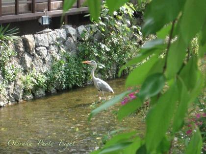 j-kyoutosirakawa2.jpg